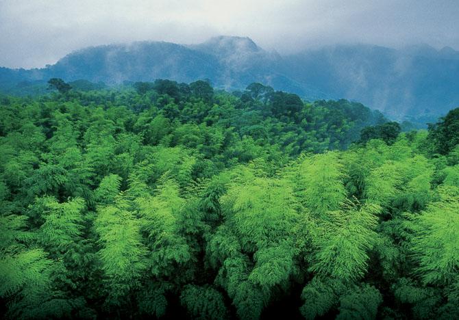 南山竹海美景